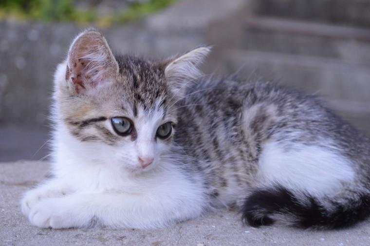 День котят 2021 отмечается 10 июля всеми любителями кошек